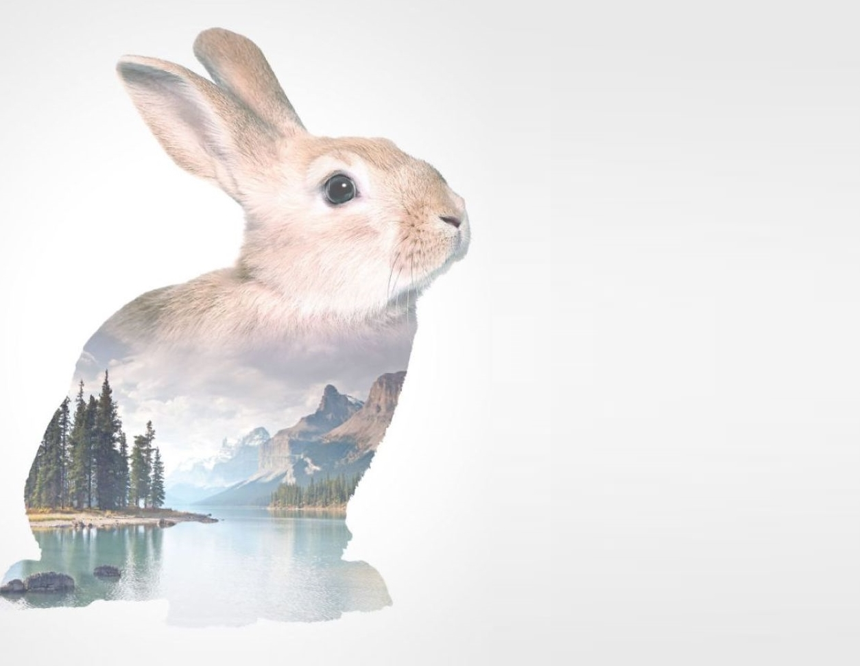 LeERP Purple Rabbit